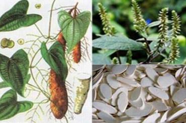 Ngỡ ngàng công dụng của 2 loại thảo dược dân gian: Khoai mài, mật mía