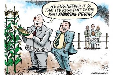 Vì sao nên tránh xa thực phẩm GMOs?