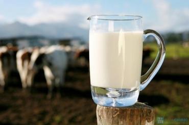 Bóc trần những sự thật khủng khiếp về sữa
