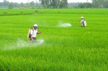 Khi nào nền nông nghiệp hết vô trách nhiệm?