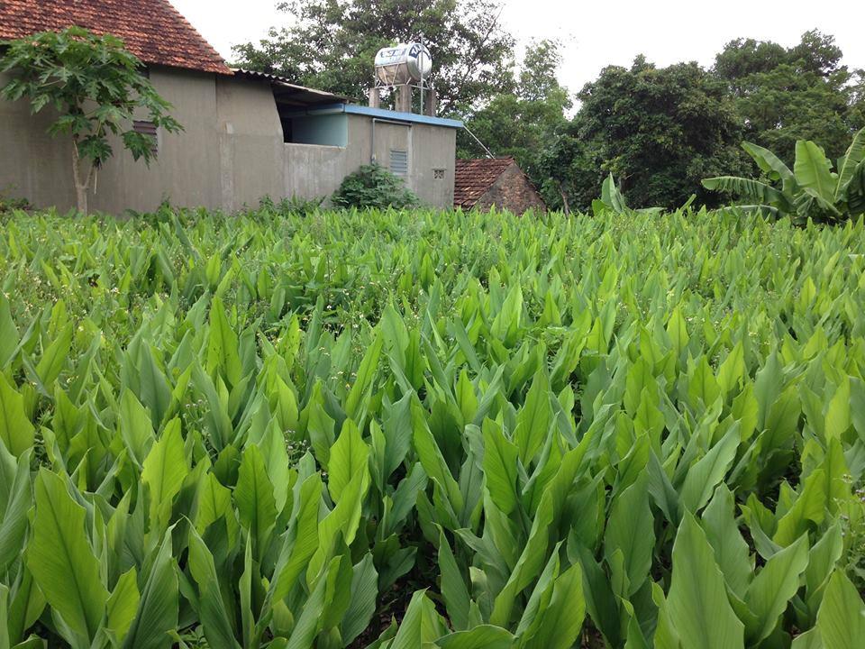 Tinh bột nghệ nguyên chất Hồng Lam 500g