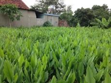 Tinh bột nghệ Hồng Lam 100g