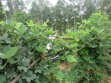 Bột sắn dây đất đồi Hồng Lam 1kg